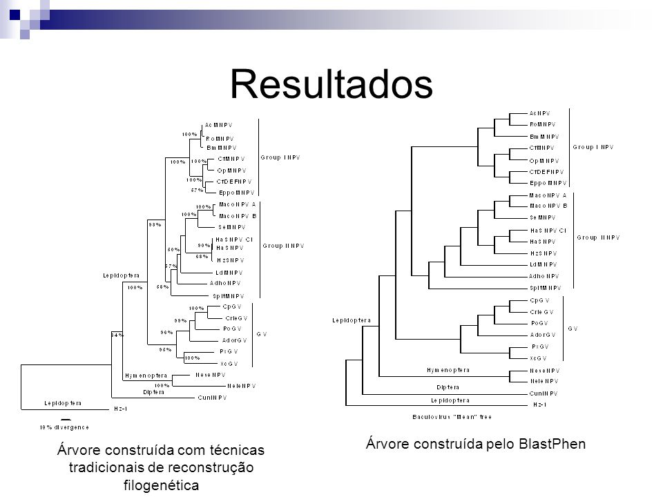 Resultados Árvore construída com técnicas tradicionais de reconstrução filogenética Árvore construída pelo BlastPhen