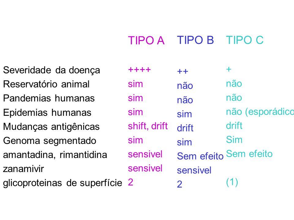 TIPO A ++++ sim shift, drift sim sensivel 2 Severidade da doença Reservatório animal Pandemias humanas Epidemias humanas Mudanças antigênicas Genoma s