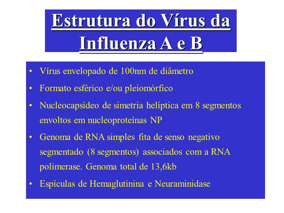 Estrutura do Vírus da Influenza A e B Vírus envelopado de 100nm de diâmetro Formato esférico e/ou pleiomórfico Nucleocapsídeo de simetria helíptica em