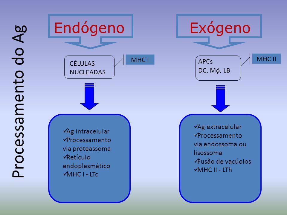 Processamento do Ag EndógenoExógeno CÉLULAS NUCLEADAS APCs DC, M, LB MHC I MHC II Ag intracelular Processamento via proteassoma Retículo endoplasmátic