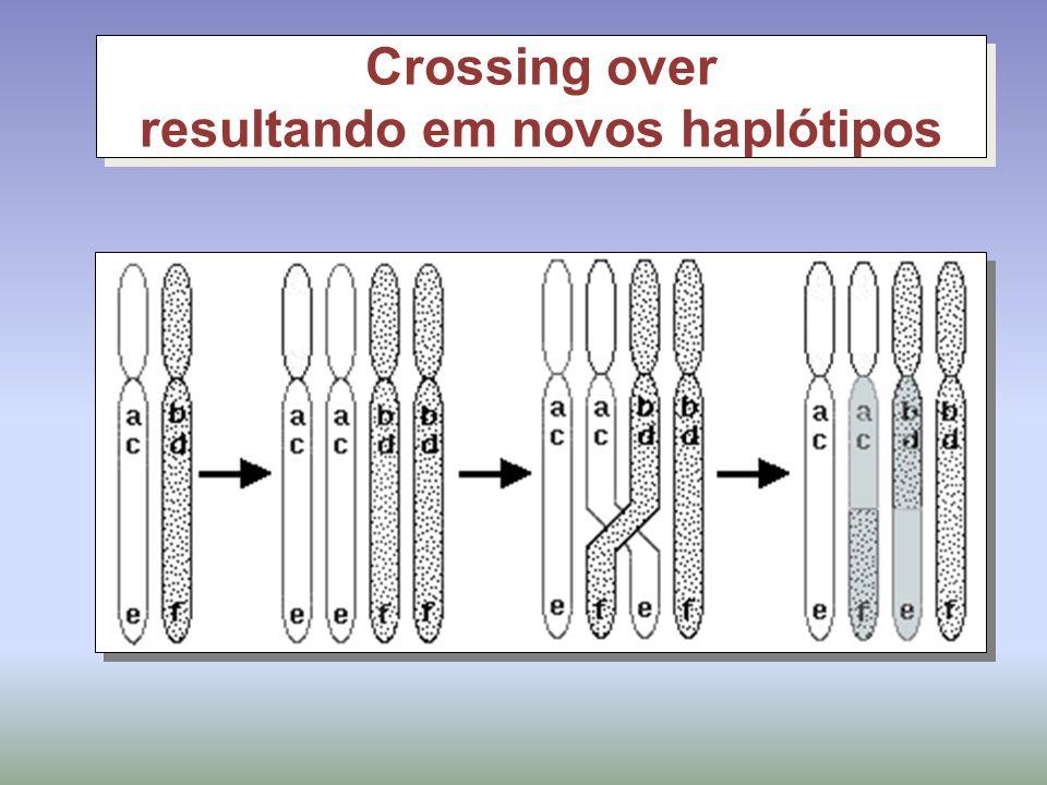 Crossing over resultando em novos haplótipos