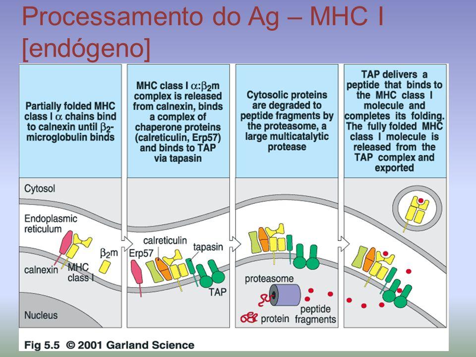 Processamento do Ag – MHC I [endógeno]