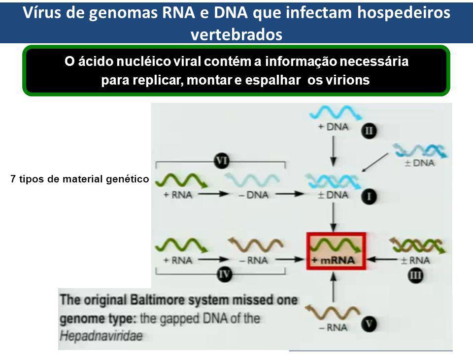 Vírus de genomas RNA e DNA que infectam hospedeiros vertebrados O ácido nucléico viral contém a informação necessária para replicar, montar e espalhar