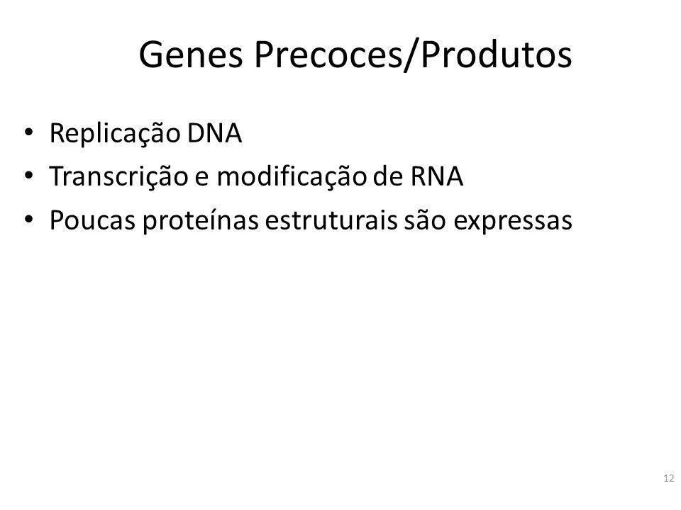 12 Genes Precoces/Produtos Replicação DNA Transcrição e modificação de RNA Poucas proteínas estruturais são expressas