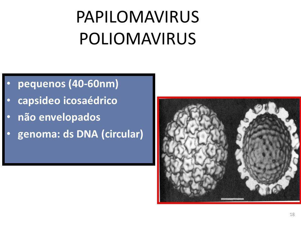 18 PAPILOMAVIRUS POLIOMAVIRUS pequenos (40-60nm) capsideo icosaédrico não envelopados genoma: ds DNA (circular)
