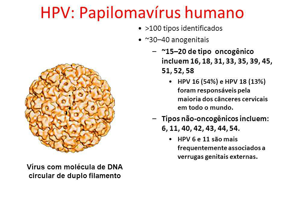 HPV: Papilomavírus humano >100 tipos identificados ~30–40 anogenitais –~15–20 de tipo oncogênico incluem 16, 18, 31, 33, 35, 39, 45, 51, 52, 58 HPV 16