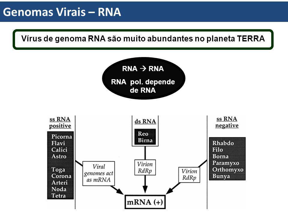Genomas Virais – RNA Vírus de genoma RNA são muito abundantes no planeta TERRA RNA RNA pol. depende de RNA