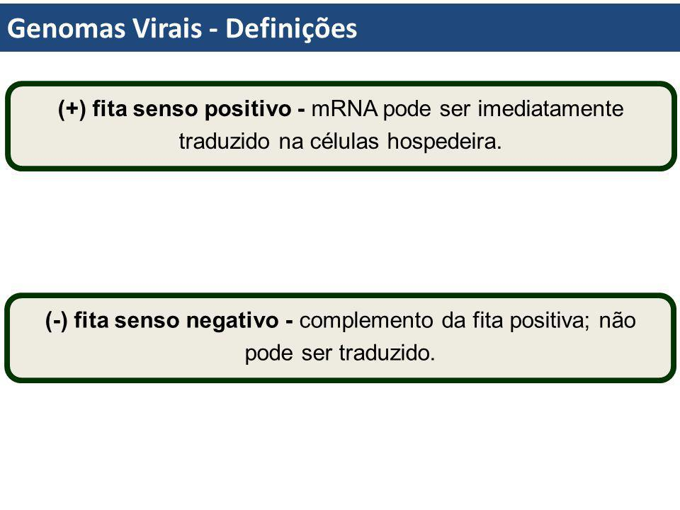Genomas Virais - Definições (+) fita senso positivo - mRNA pode ser imediatamente traduzido na células hospedeira. (-) fita senso negativo - complemen