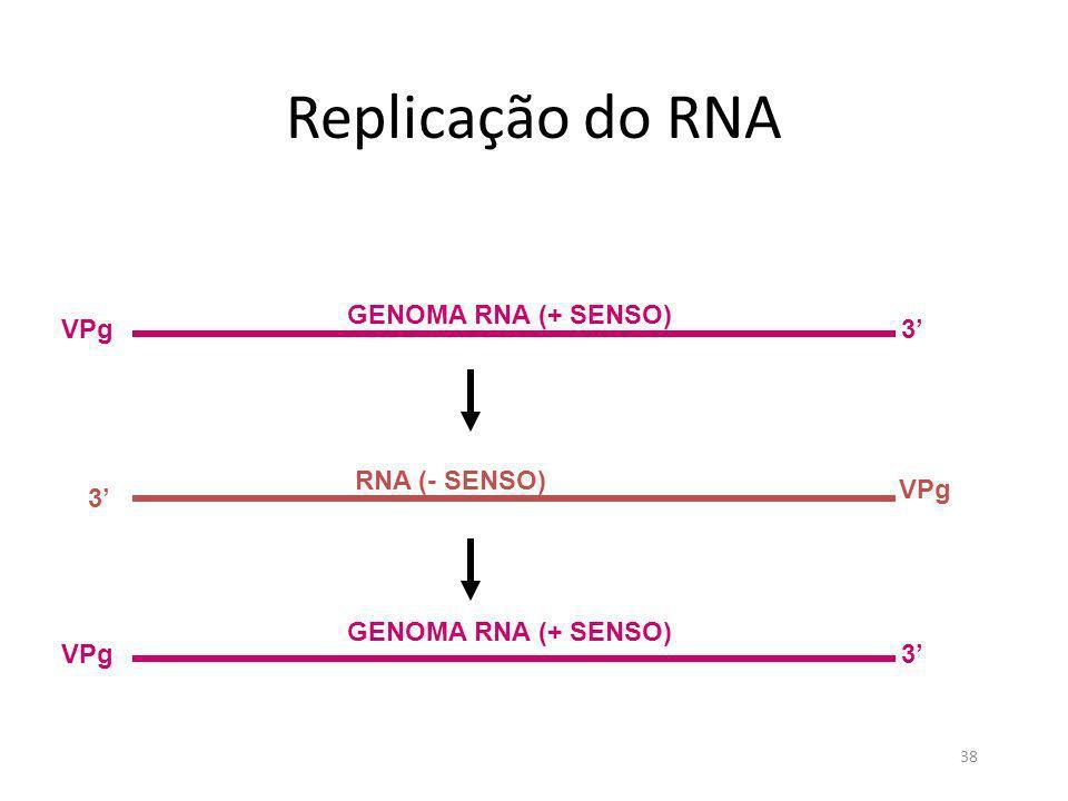 38 Replicação do RNA GENOMA RNA (+ SENSO) 3VPg RNA (- SENSO) 3 VPg 3 GENOMA RNA (+ SENSO)