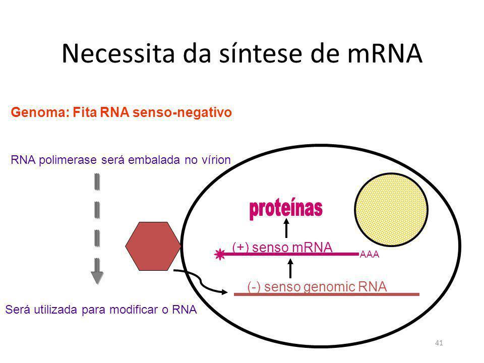 41 Necessita da síntese de mRNA Genoma: Fita RNA senso-negativo RNA polimerase será embalada no vírion AAA (+) senso mRNA (-) senso genomic RNA Será u