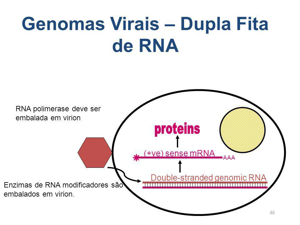 46 Genomas Virais – Dupla Fita de RNA AAA (+ve) sense mRNA Double-stranded genomic RNA Enzimas de RNA modificadores são embalados em virion. RNA polim