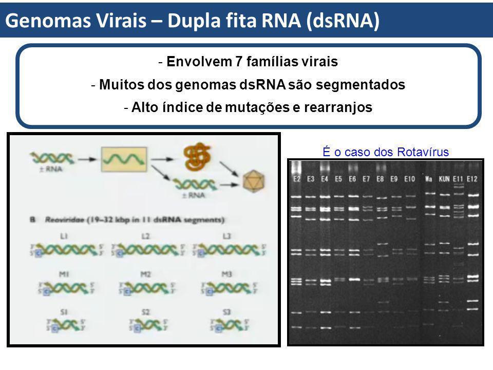 Genomas Virais – Dupla fita RNA (dsRNA) - Envolvem 7 famílias virais - Muitos dos genomas dsRNA são segmentados - Alto índice de mutações e rearranjos