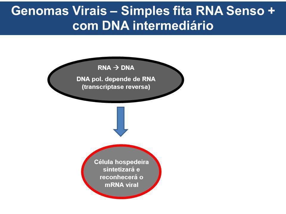 Genomas Virais – Simples fita RNA Senso + com DNA intermediário RNA DNA DNA pol. depende de RNA (transcriptase reversa) Célula hospedeira sintetizará