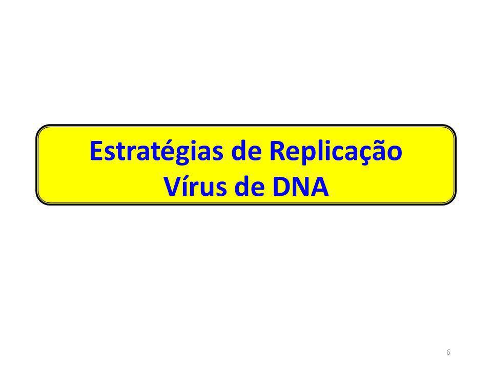ESTRATÉGIAS DOS VÍRUS DNA DE REPLICAÇÃO NUCLEAR Necessidades: 1) Transcrever mRNA para a síntese de proteínas virais Responsável: RNA polimerase dependente de DNA, mais proteínas adicionais todos emprestadosda célula hospedeira