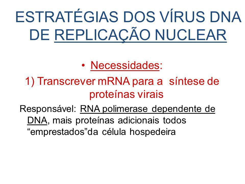 ESTRATÉGIAS DOS VÍRUS DNA DE REPLICAÇÃO NUCLEAR Necessidades: 1) Transcrever mRNA para a síntese de proteínas virais Responsável: RNA polimerase depen