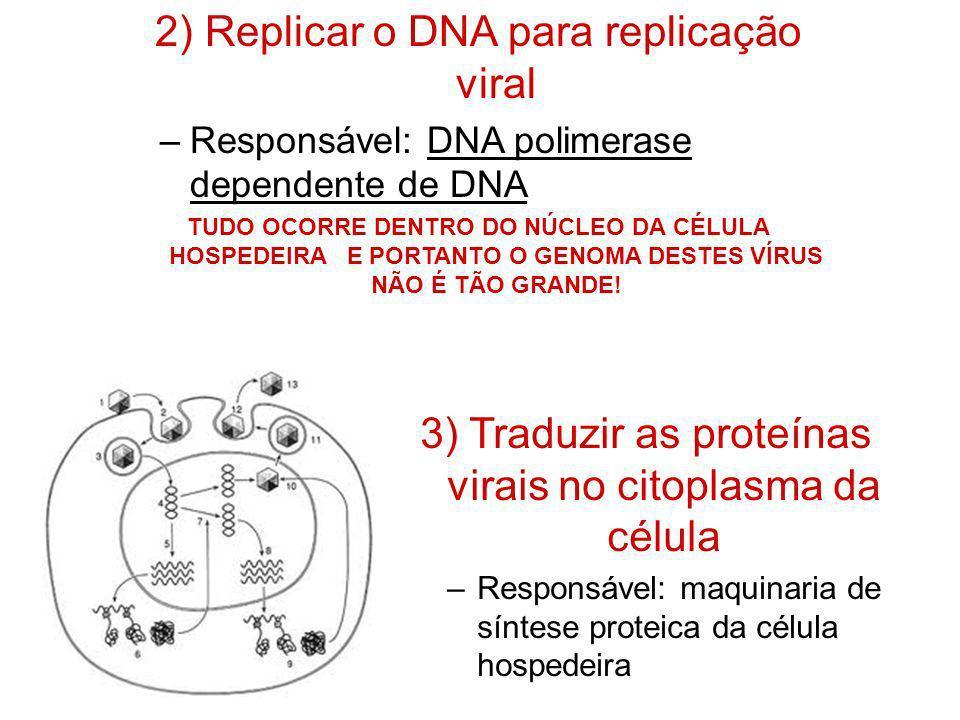 2) Replicar o DNA para replicação viral –Responsável: DNA polimerase dependente de DNA TUDO OCORRE DENTRO DO NÚCLEO DA CÉLULA HOSPEDEIRA E PORTANTO O
