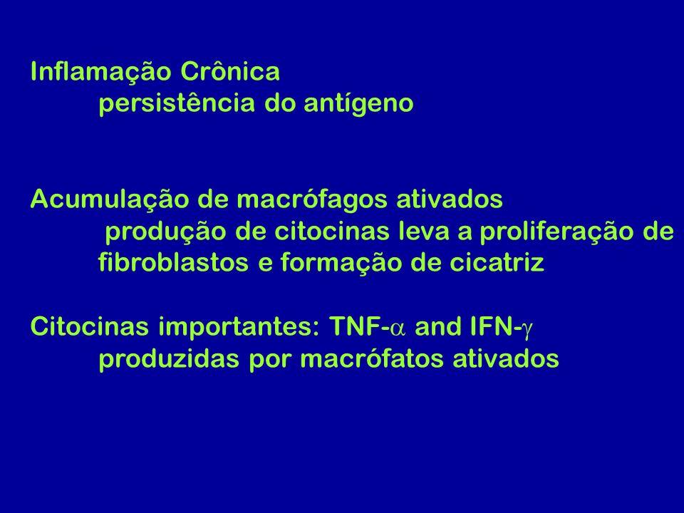 Inflamação Crônica persistência do antígeno Acumulação de macrófagos ativados produção de citocinas leva a proliferação de fibroblastos e formação de