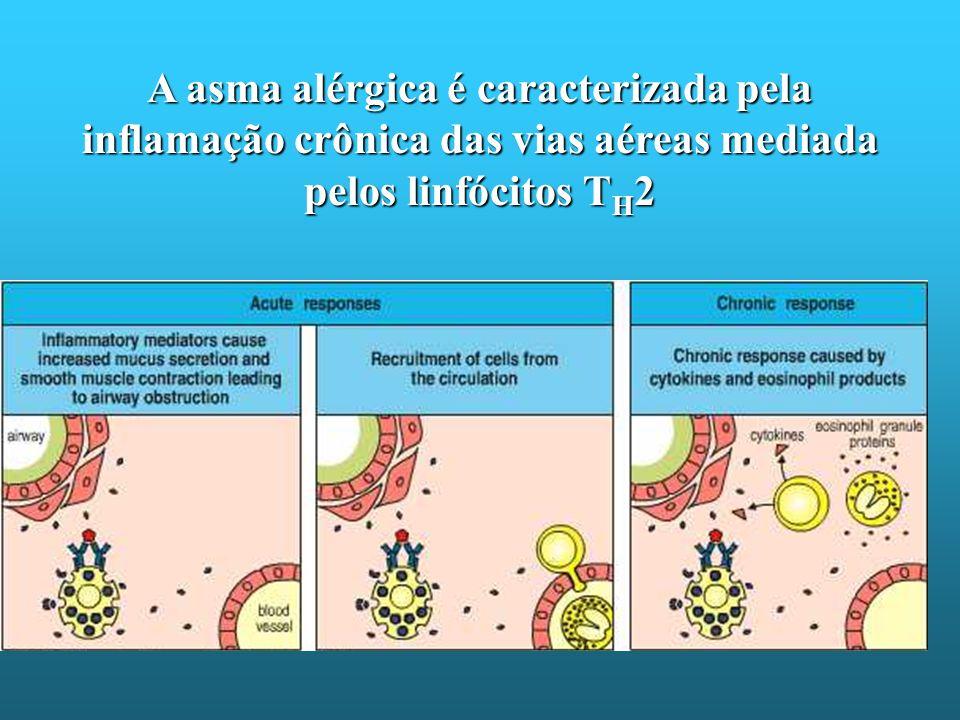 A asma alérgica é caracterizada pela inflamação crônica das vias aéreas mediada pelos linfócitos T H 2