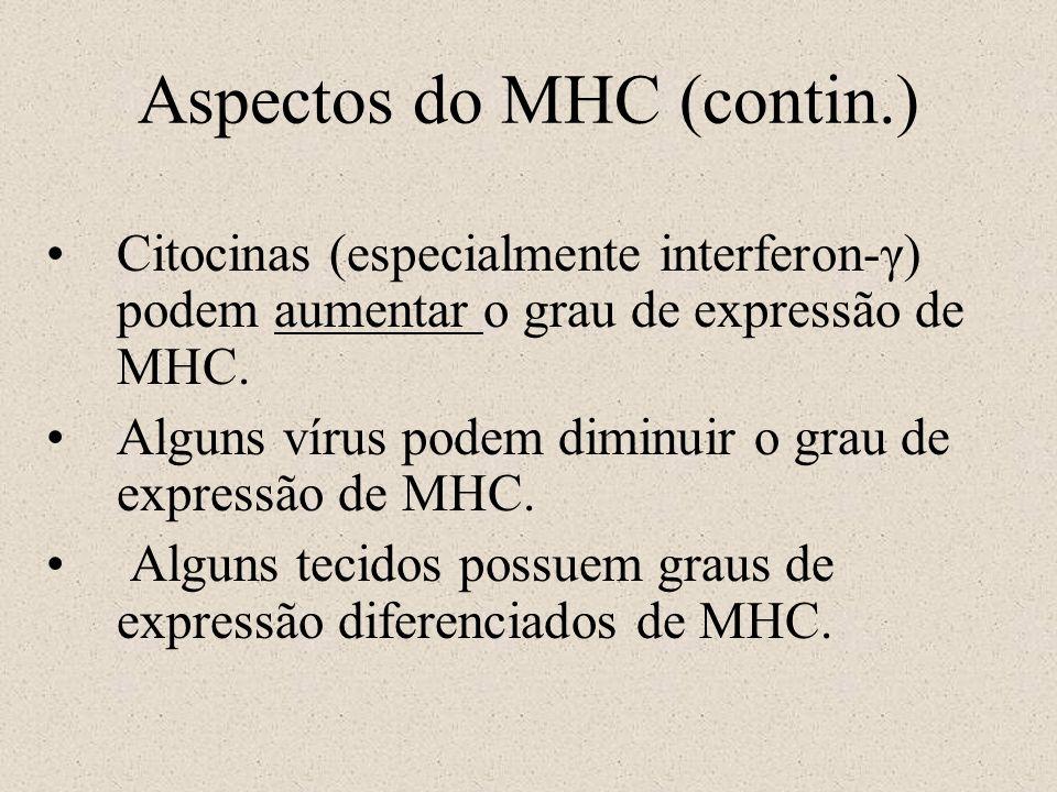 Aspectos do MHC (contin.) Citocinas (especialmente interferon-γ) podem aumentar o grau de expressão de MHC. Alguns vírus podem diminuir o grau de expr