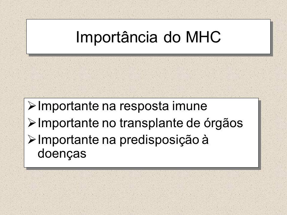 Importância do MHC Importante na resposta imune Importante no transplante de órgãos Importante na predisposição à doenças Importante na resposta imune