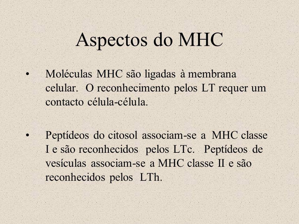Aspectos do MHC Moléculas MHC são ligadas à membrana celular. O reconhecimento pelos LT requer um contacto célula-célula. Peptídeos do citosol associa