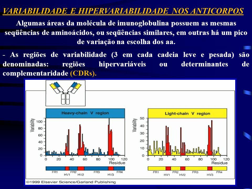 VARIABILIDADE E HIPERVARIABILIDADE NOS ANTICORPOS Algumas áreas da molécula de imunoglobulina possuem as mesmas seqüências de aminoácidos, ou seqüênci