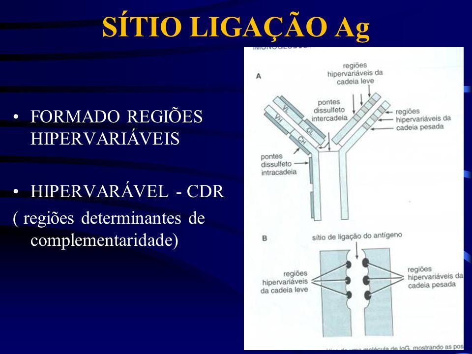 SÍTIO LIGAÇÃO Ag FORMADO REGIÕES HIPERVARIÁVEIS HIPERVARÁVEL - CDR ( regiões determinantes de complementaridade)