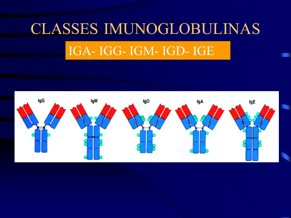 CLASSES IMUNOGLOBULINAS IGA- IGG- IGM- IGD- IGE