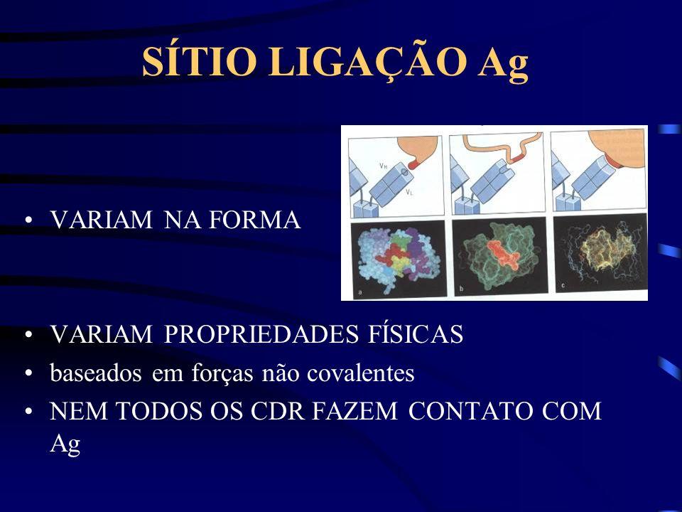 SÍTIO LIGAÇÃO Ag VARIAM NA FORMA VARIAM PROPRIEDADES FÍSICAS baseados em forças não covalentes NEM TODOS OS CDR FAZEM CONTATO COM Ag