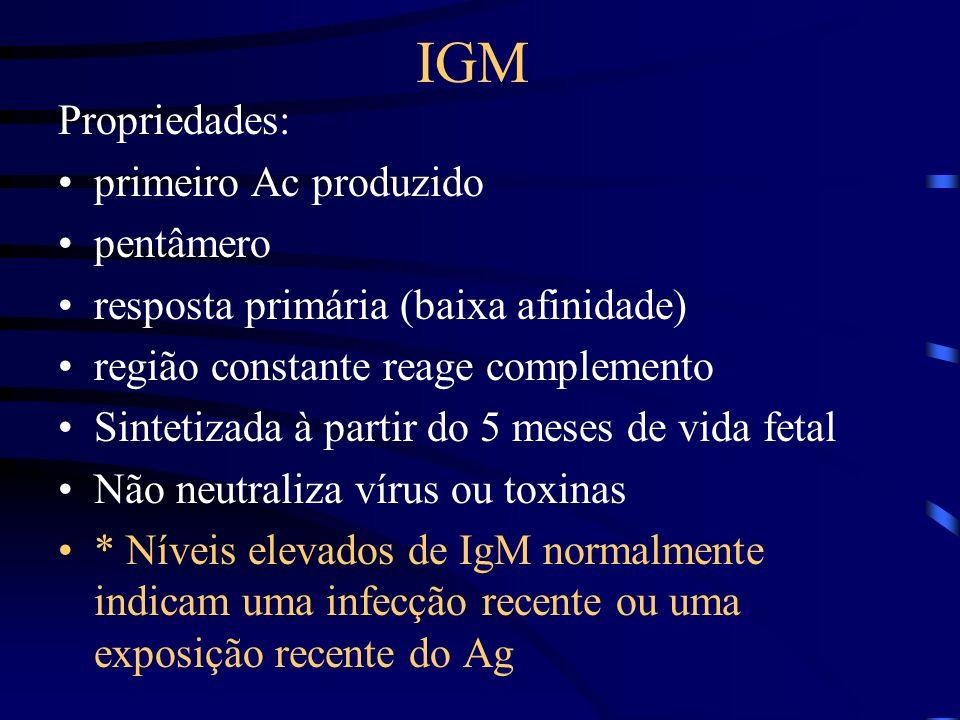 IGM Propriedades: primeiro Ac produzido pentâmero resposta primária (baixa afinidade) região constante reage complemento Sintetizada à partir do 5 mes