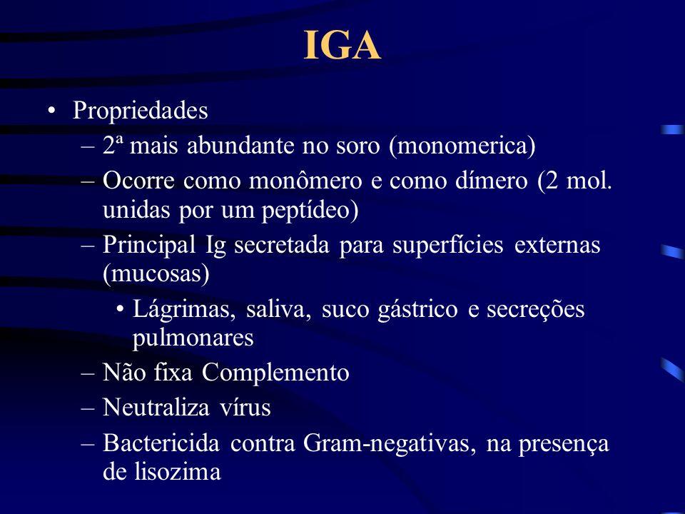 IGA Propriedades –2ª mais abundante no soro (monomerica) –Ocorre como monômero e como dímero (2 mol. unidas por um peptídeo) –Principal Ig secretada p