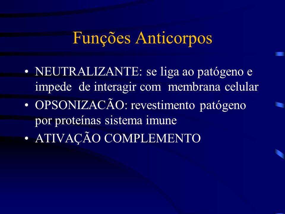 Funções Anticorpos NEUTRALIZANTE: se liga ao patógeno e impede de interagir com membrana celular OPSONIZACÃO: revestimento patógeno por proteínas sist