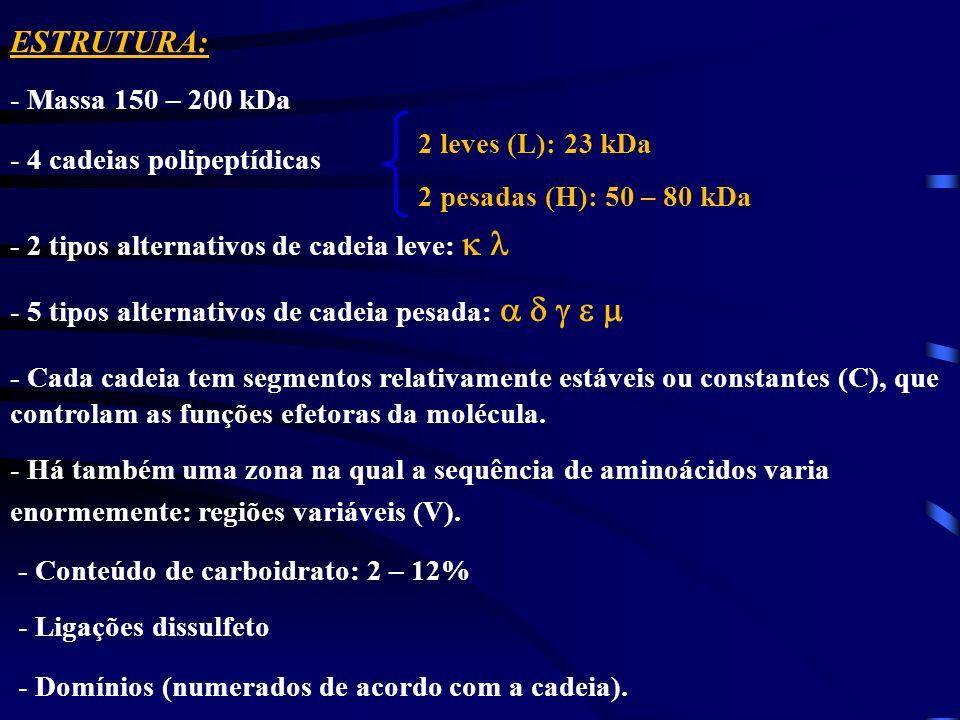 - Conteúdo de carboidrato: 2 – 12% - Ligações dissulfeto - Domínios (numerados de acordo com a cadeia). 2 leves (L): 23 kDa 2 pesadas (H): 50 – 80 kDa