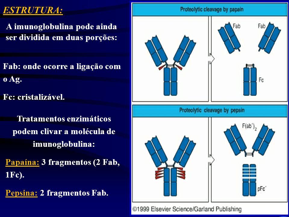 Tratamentos enzimáticos podem clivar a molécula de imunoglobulina: Papaína: 3 fragmentos (2 Fab, 1Fc). Pepsina: 2 fragmentos Fab. ESTRUTURA: A imunogl