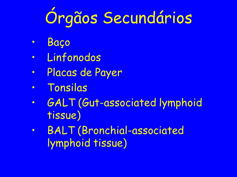 Órgãos Secundários Baço Linfonodos Placas de Payer Tonsilas GALT (Gut-associated lymphoid tissue) BALT (Bronchial-associated lymphoid tissue)