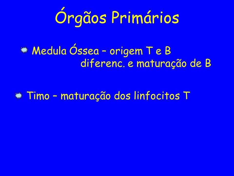 Órgãos Primários Medula Óssea – origem T e B diferenc. e maturação de B Timo – maturação dos linfocitos T