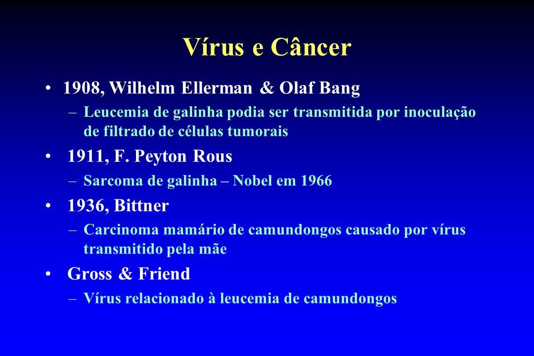 Vírus e Câncer 1908, Wilhelm Ellerman & Olaf Bang –Leucemia de galinha podia ser transmitida por inoculação de filtrado de células tumorais 1911, F. P