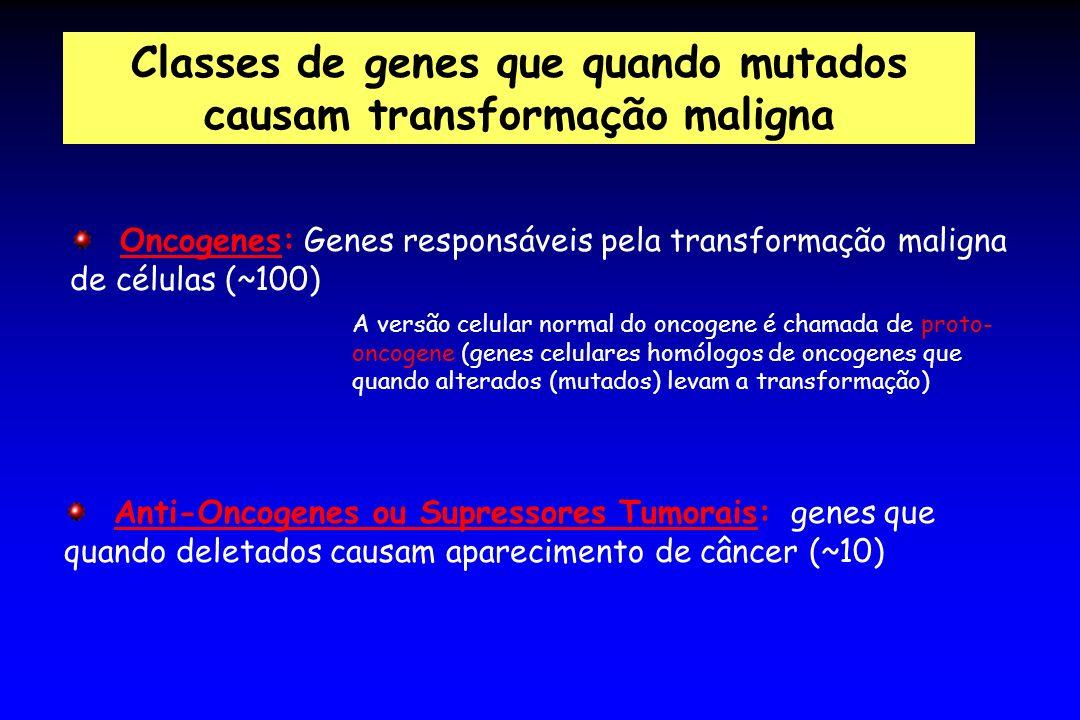 Classes de genes que quando mutados causam transformação maligna Oncogenes: Genes responsáveis pela transformação maligna de células (~100) Anti-Oncog