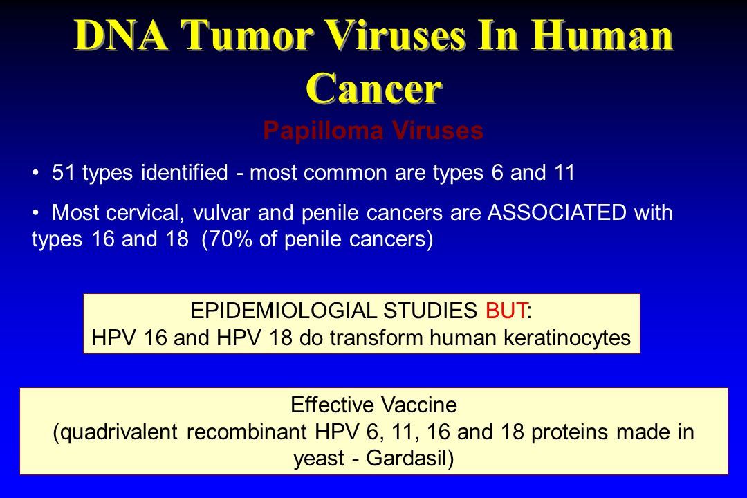 DNA Tumor Viruses In Human Cancer Papilloma Viruses 51 types identified - most common are types 6 and 11 Most cervical, vulvar and penile cancers are