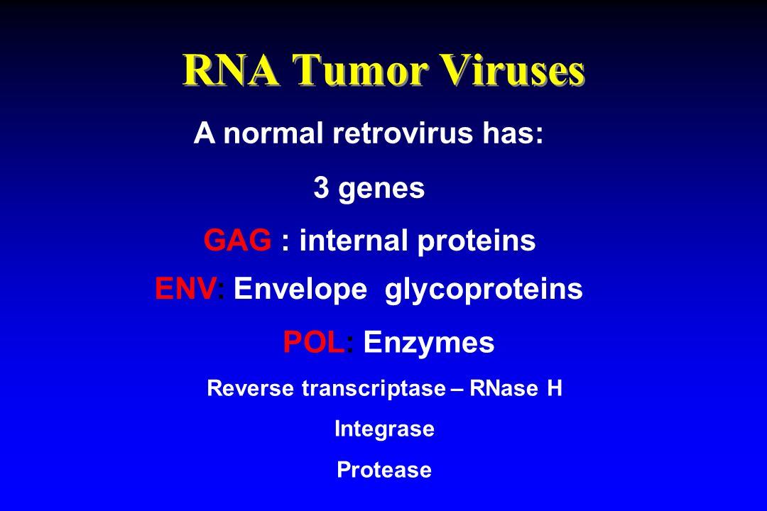 RNA Tumor Viruses POL: Enzymes Reverse transcriptase – RNase H Integrase Protease A normal retrovirus has: 3 genes GAG : internal proteins ENV: Envelo