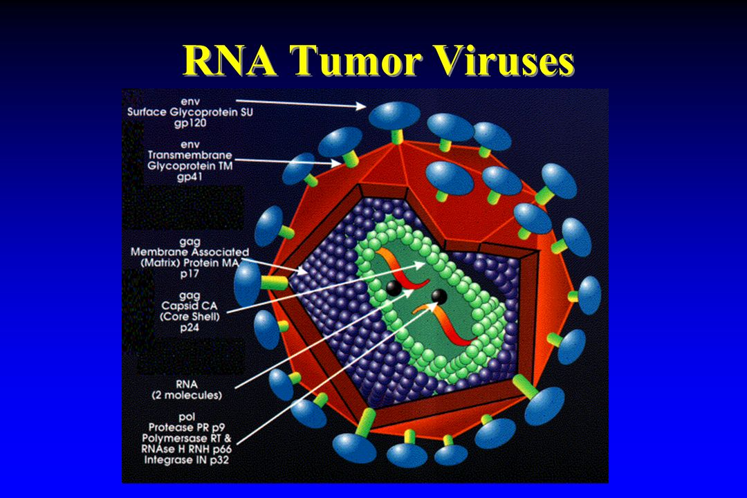 RNA Tumor Viruses