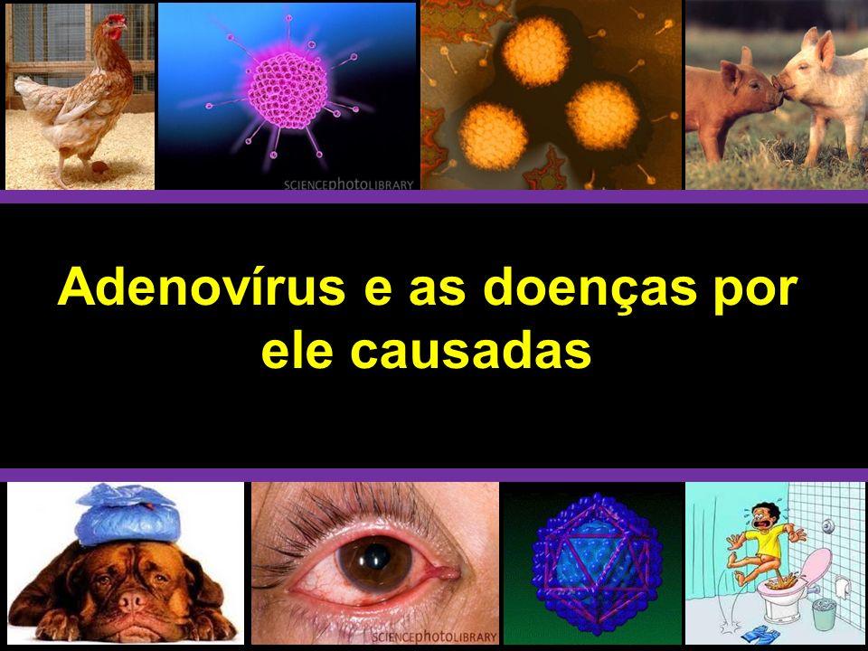 O ciclo replicativo se completa em 20 a 24 horas e resulta na produção de aproximadamente 104 partículas víricas por célula infectada.