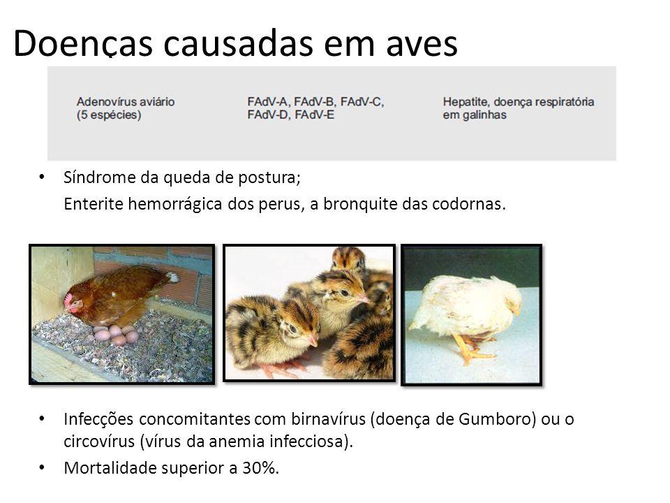 Doenças causadas em aves Síndrome da queda de postura; Enterite hemorrágica dos perus, a bronquite das codornas. Infecções concomitantes com birnavíru