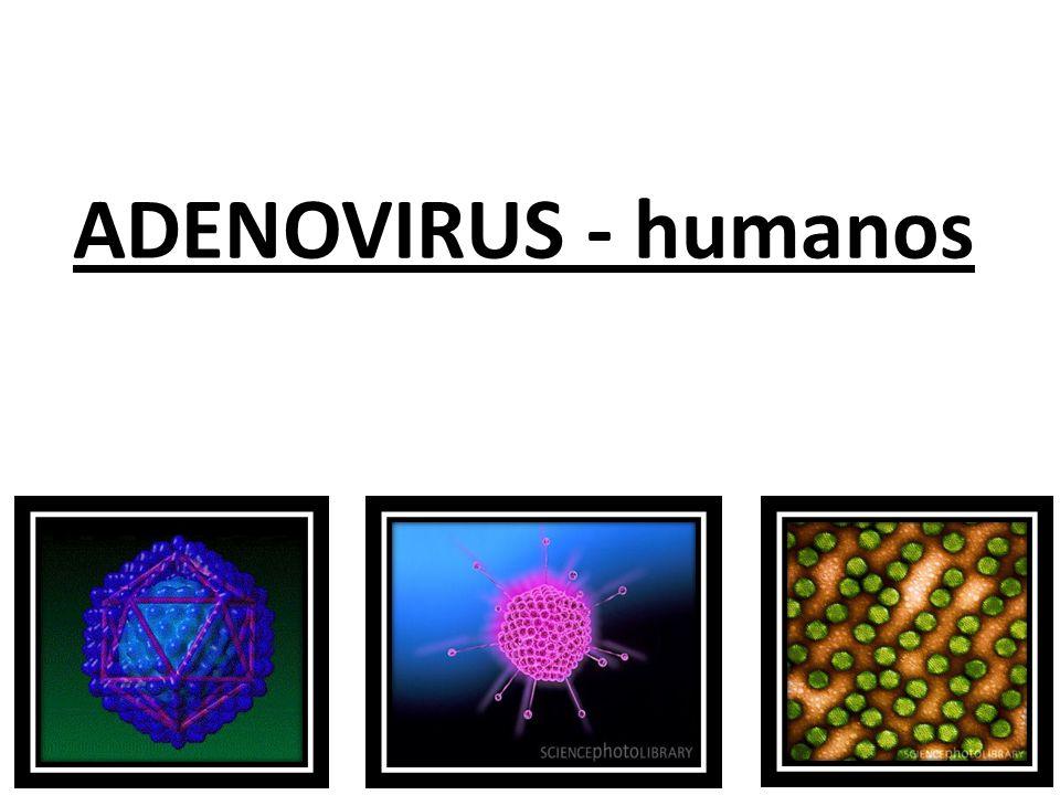 ADENOVIRUS - humanos