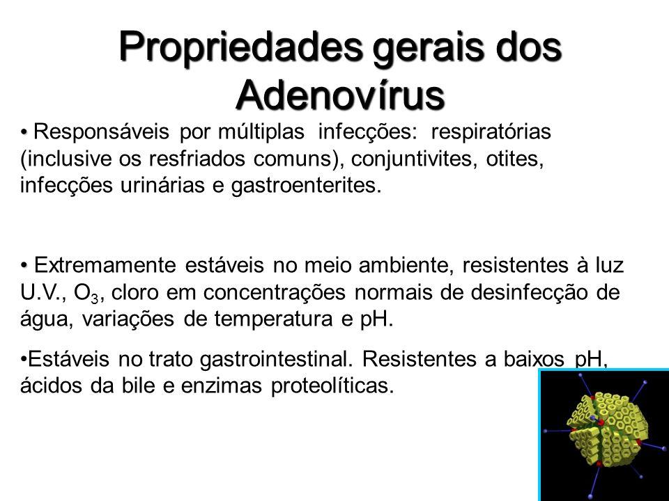 Propriedades gerais dos Adenovírus Responsáveis por múltiplas infecções: respiratórias (inclusive os resfriados comuns), conjuntivites, otites, infecç