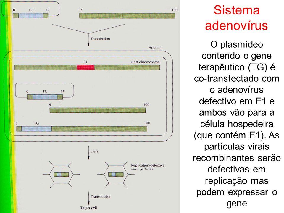Sistema adenovírus O plasmídeo contendo o gene terapêutico (TG) é co-transfectado com o adenovírus defectivo em E1 e ambos vão para a célula hospedeir