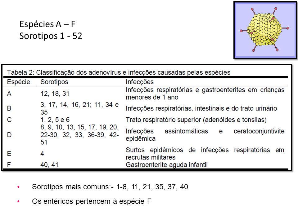 Espécies A – F Sorotipos 1 - 52 Sorotipos mais comuns:- 1-8, 11, 21, 35, 37, 40 Os entéricos pertencem à espécie F
