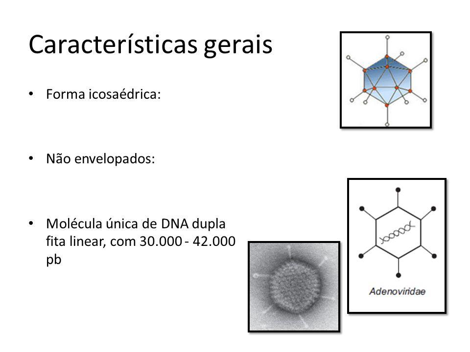 Características gerais Forma icosaédrica: Não envelopados: Molécula única de DNA dupla fita linear, com 30.000 - 42.000 pb
