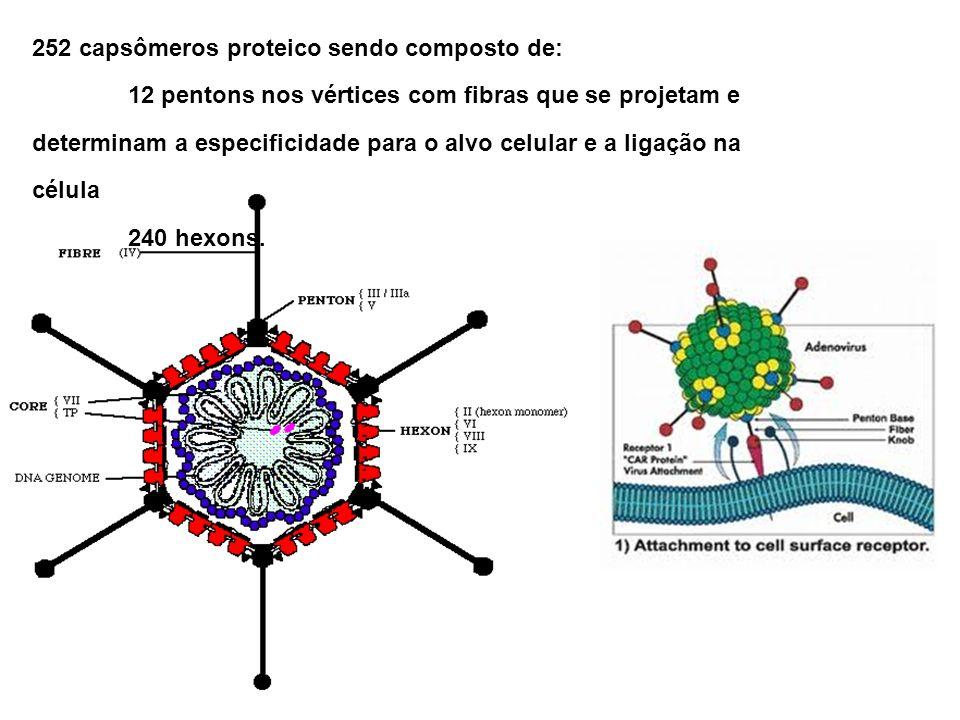 Sistema adenovírus O plasmídeo contendo o gene terapêutico (TG) é co-transfectado com o adenovírus defectivo em E1 e ambos vão para a célula hospedeira (que contém E1).