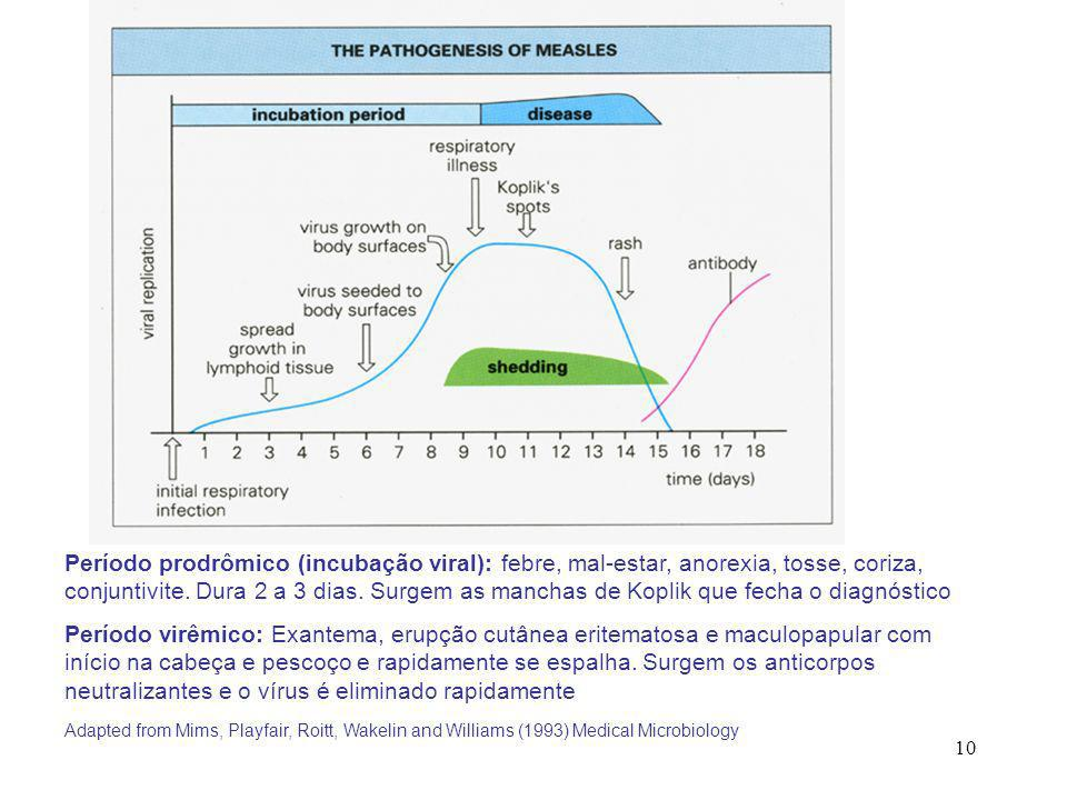 10 Adapted from Mims, Playfair, Roitt, Wakelin and Williams (1993) Medical Microbiology Período prodrômico (incubação viral): febre, mal-estar, anorex